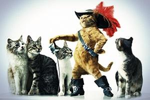 В погоне за харизмой - кот в сапогах
