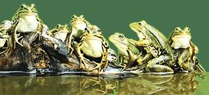 Конфликт в организации: подходы и тактики - лягушки